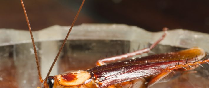 Five facts about roaches that will keep you up at night:  The good the bad, the ugly