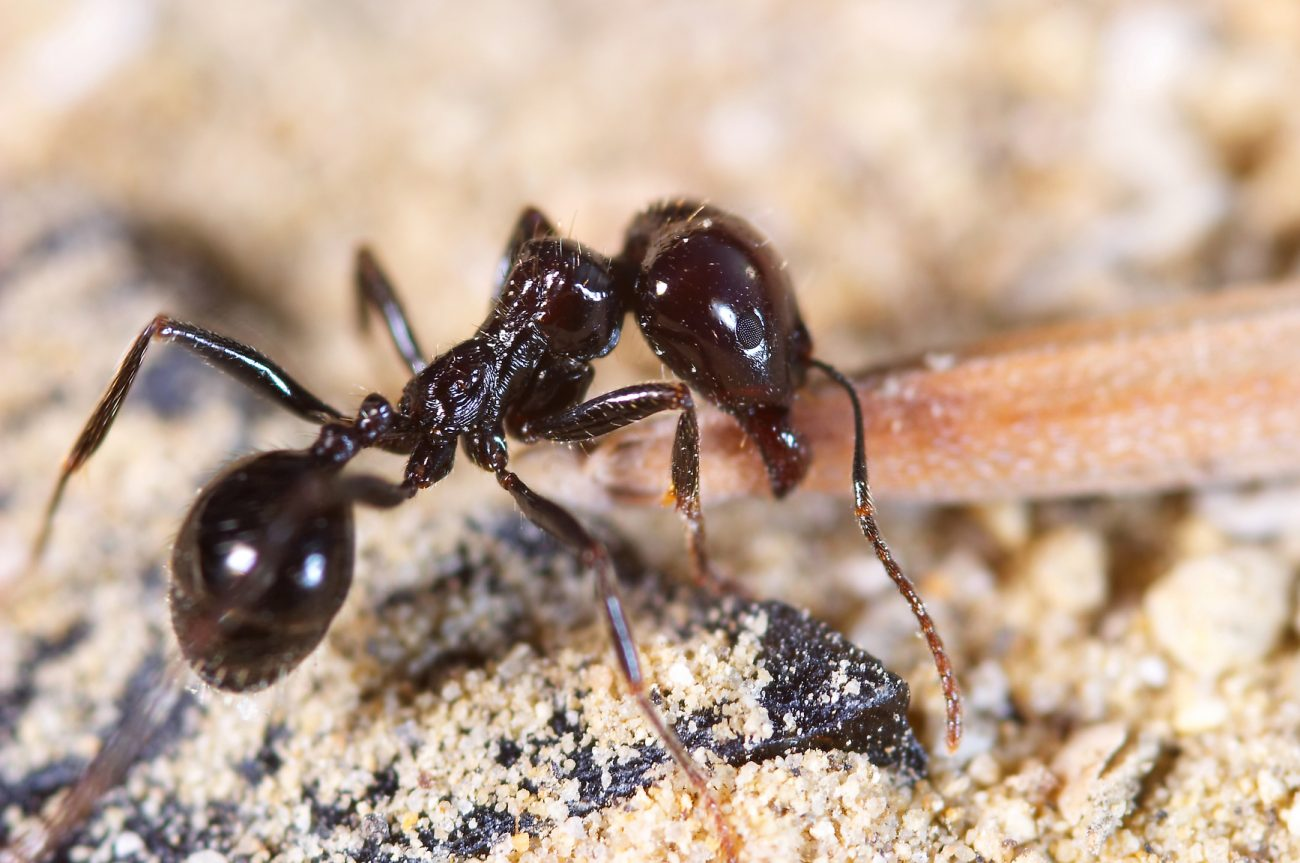 A picture of an ant